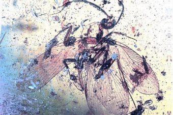 Najstaršia vírusová infekcia