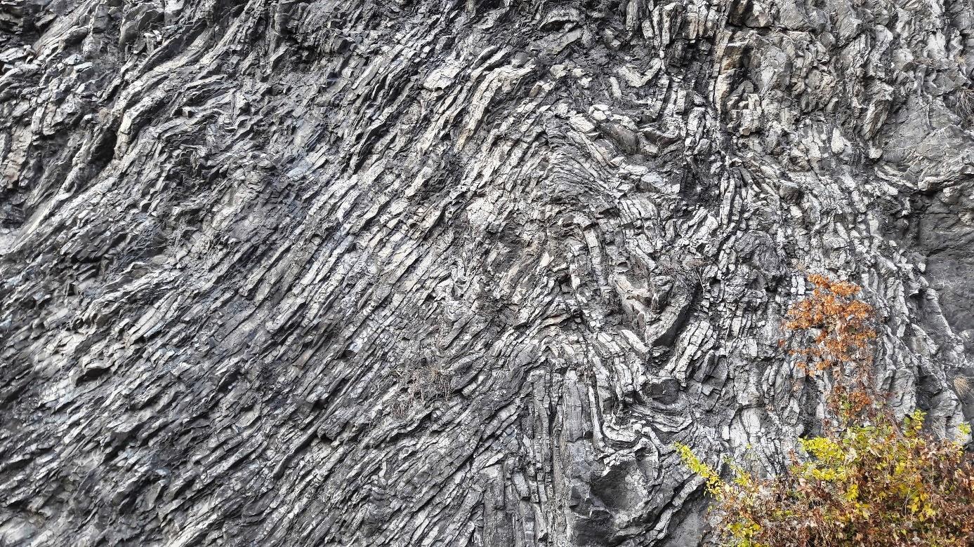 Detailne prevrásnené devónske vápence na lokalite Barrandovské skaly v Prahe.