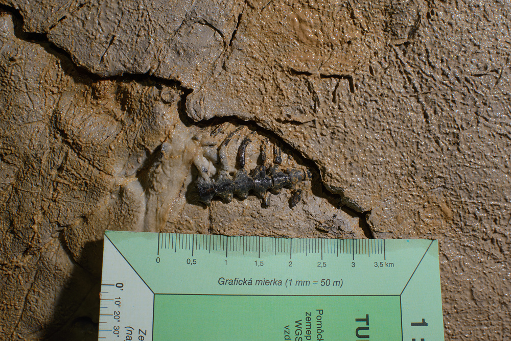 Fossil finding in the original position.